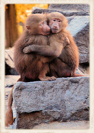 Affection & touching monkeys image